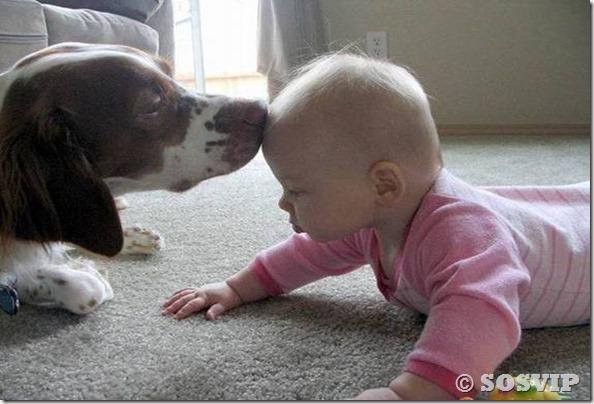 Cachorro babá a melhor babá babysitter (16)