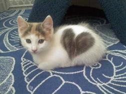 Лучший подарок на День Валентина