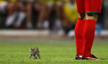 Котенок идет по полю во время матча между клубами «Биркиркара» и «Валлетта». (Darrin Zammit Lupi / Reuters)