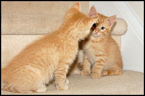 暧昧关系最高境界:吻你但不爱你