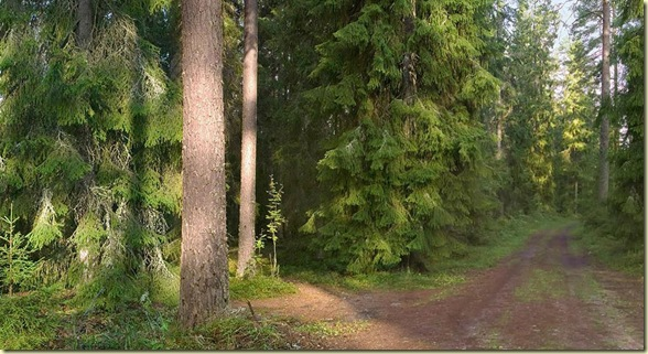Découvrez forêt