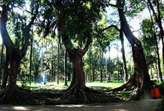 Parque da Luz. Foto: Gladstone Barreto. Clique para ampliar