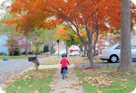 fall days 076