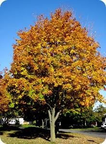 favefalltree