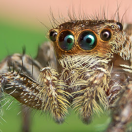 Deep Look by Muhd Shahjeehan - Animals Insects & Spiders