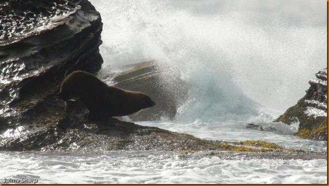 kayakdownundernzleg2-04288