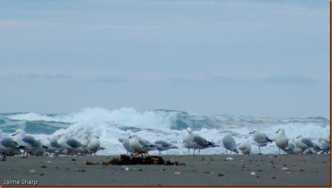 kayakdownundernzleg3-00592