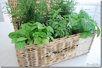 Herbs 052