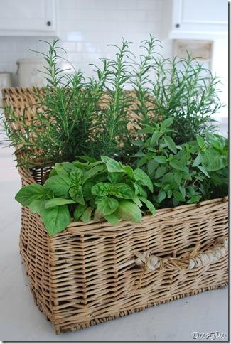 Herbs 079