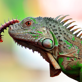 FREINDS by Sandi Nopri yanto - Animals Reptiles (  )