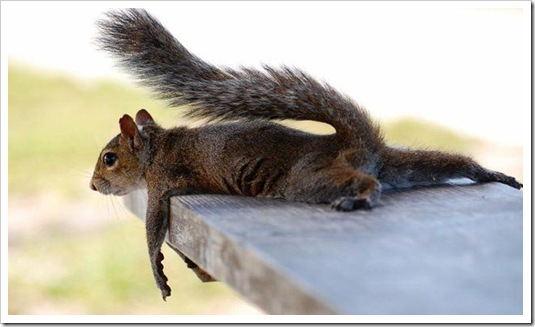 squirrel laying down.cute