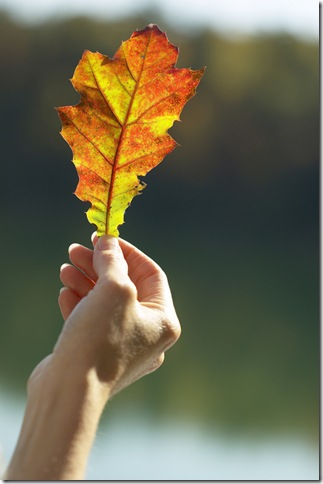 hand_holding_autumn_leaf1222522202