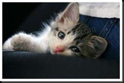Cute_Cat1