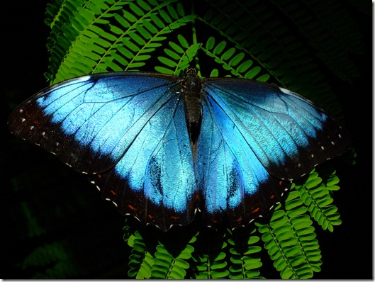 butterfly 2 again