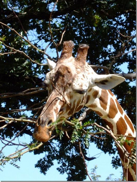 Zoo 061