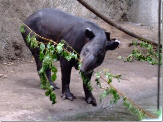 Zoo 171