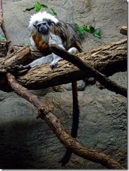 Zoo 160