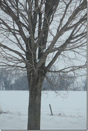 Winter 067