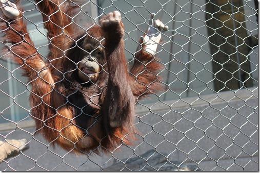 Zoo 651_thumb[1]