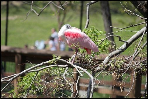 Zoo3 435