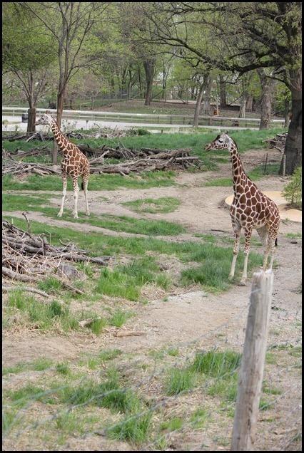 Zoo3-680_thumb_thumb_thumb