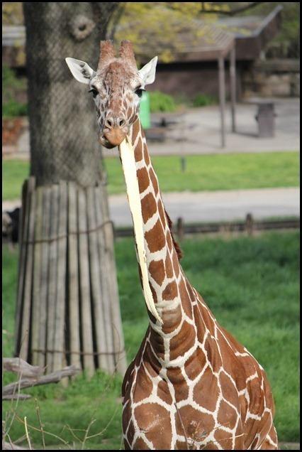 Zoo3-701_thumb_thumb_thumb