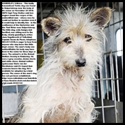 Kimberley dog in shock after guarding master s body at Vaalrivier Nov252010