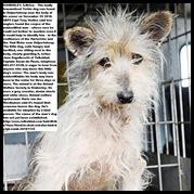 Kimberley dog in shock after guarding master s body at Vaalrivier Nov252010