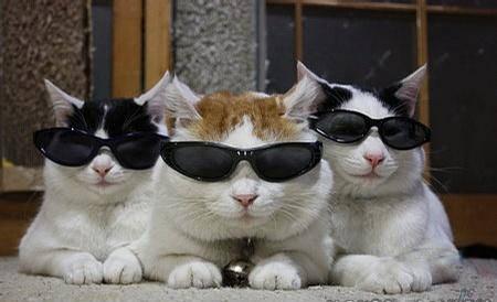 今天我们戴墨镜