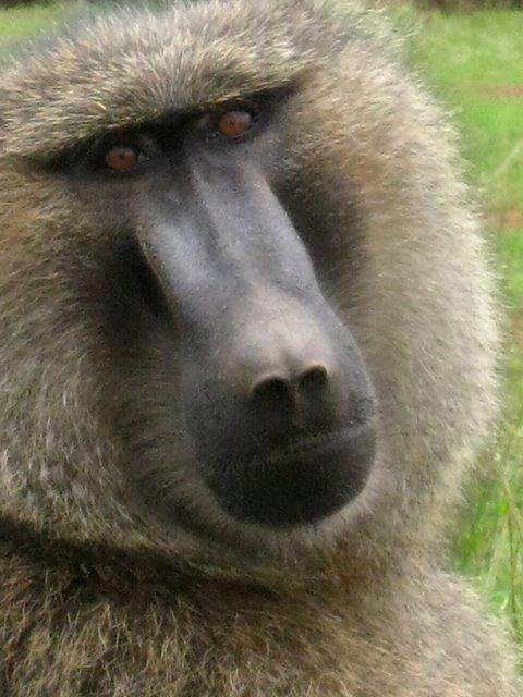 rwanda_ANIMALS.JPG