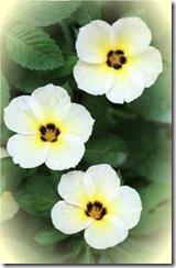 flowersleft