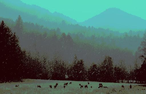 Elk Pasture