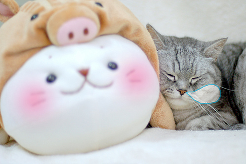 cute cat sleeping soundly with stuffed animal