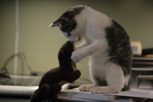 cute cat holding and kissing a stuffed toy