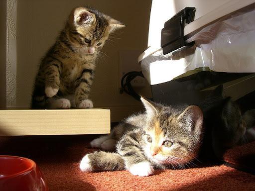 cute rescued kitten