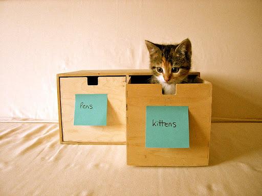 cute rescued kitten in the box