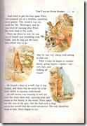 peter rabbit_9