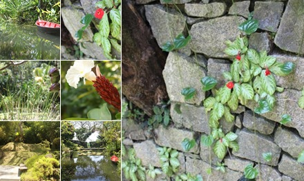 View Tropical Spice Garden