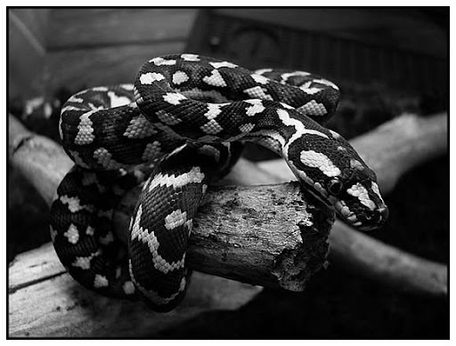 Beautiful Black And White Photographs Of Animals ( 30 Pics)