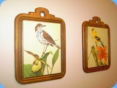 bird pictures 003