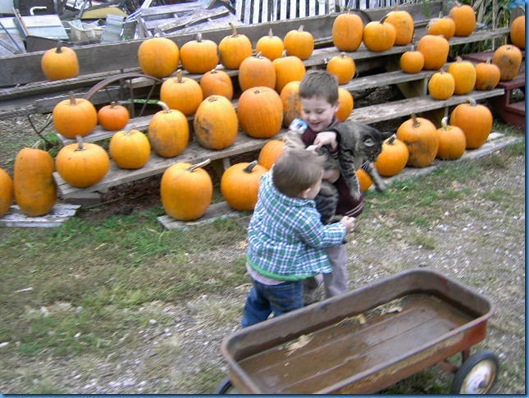 Pumpkin Farm Oct 2009 014