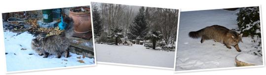 View Chat et la neige