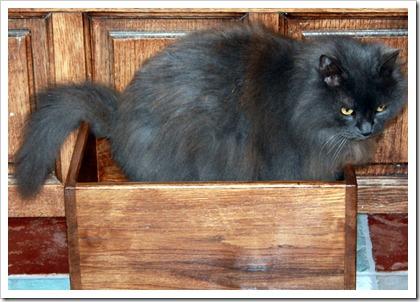 Кот в ящике