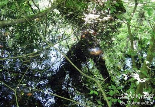 رهاسازی لاک پشتهای برکه ای Turtle-Abandon-Rasht-2