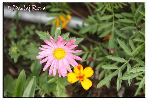 Hot Pink © Pankaj Batra
