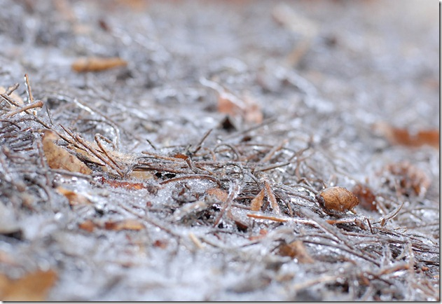 ice on pinestraw and ground