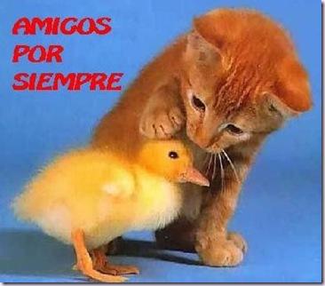 1025_amigos