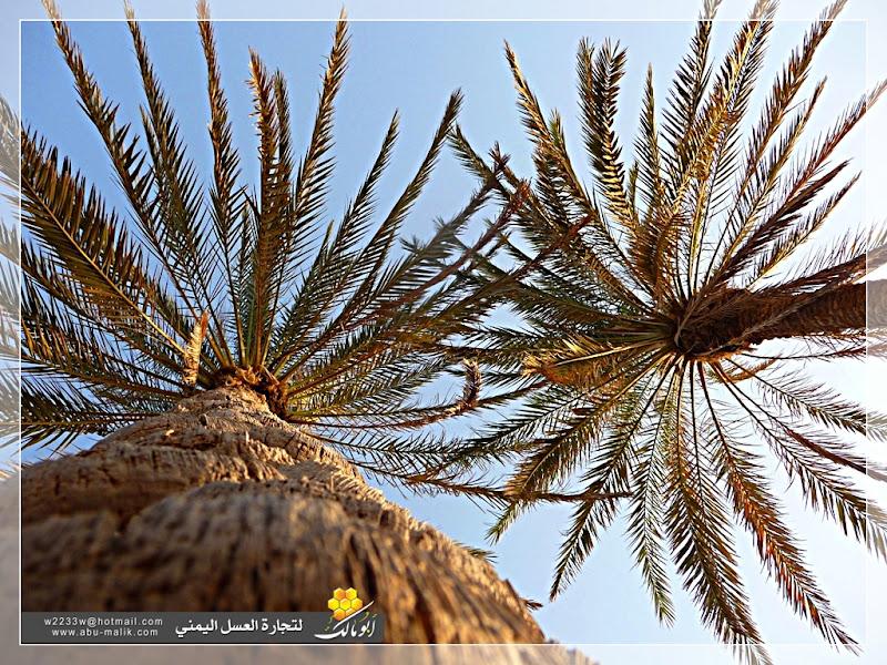 مكان جديد من اليمن السعيد . . . الخوخه 5.JPG