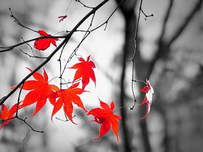 http://lh6.ggpht.com/__2BNwHJdNOg/S8GOFHLcU_I/AAAAAAAAANY/QEfDAsBt9Is/s400/outono.jpg