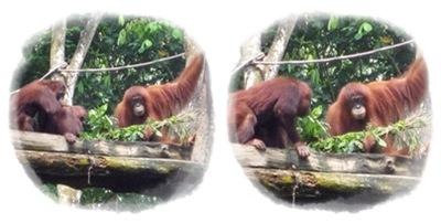 5b Primates